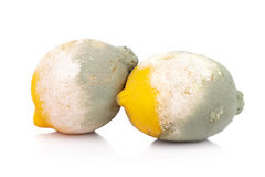 Moldy lemon citrus fruit isolated on white background Royalty Free Stock Photo