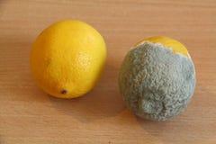 Moldy lemon and fresh lemon Stock Image