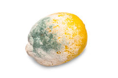 Moldy lemon Royalty Free Stock Photos
