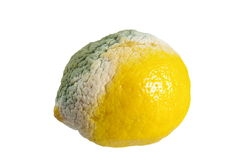 Moldy lemon Stock Photos