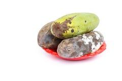Moldy mango isolated on white Stock Images