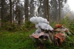 Moldy mushroom Stock Photography