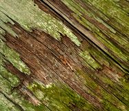 Moldy old wood Royalty Free Stock Photo