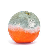 Moldy orange Stock Images