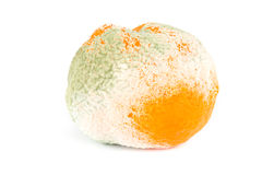 Moldy orange isolated on white Royalty Free Stock Images