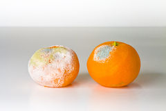 A moldy orange Stock Photo