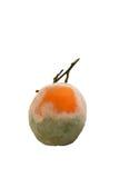 Moldy orange isolated on white background. Close up of moldy orange isolated on white background Royalty Free Stock Photos