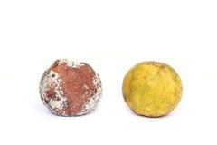 Moldy orange  over white background Stock Photo