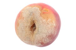 Moldy peach on white background Royalty Free Stock Photography