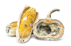 Moldy pumpkin and corn. On white background Royalty Free Stock Photos