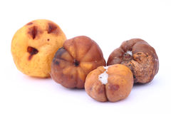 Moldy quinces Stock Photos