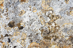 Moldy rock texture Royalty Free Stock Photography