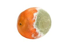 Moldy rotten orange. Isolated on the white background stock photos