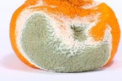 moldy-rotten-orange-fruit-isolated-pure-white-64175883.jpg