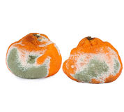 Moldy Rotten Orange Stock Images