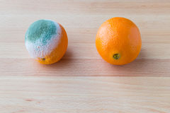 Moldy rotten orange fruit near fresh orange Royalty Free Stock Photo