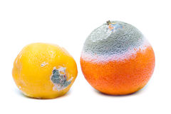 Moldy rotten orange and lemon fruit Stock Photos