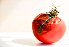 Moldy rotten tomato. After 1 month royalty free stock images