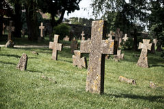 Moldy stone crosses in cemetery. (Many moldy stone crosses are standing among green grass of cemetery with trees on background Royalty Free Stock Photos