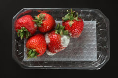 Moldy strawberries. In a plastic package. Black background Royalty Free Stock Photography