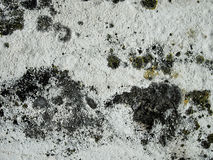Moldy Wall. Close up in white color Royalty Free Stock Photo