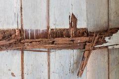 Moldy walls, wood beams. Stock Photos