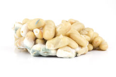 Moldy white beans Stock Photography