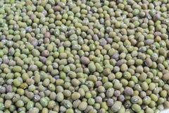 Moldy ymung bean grams close Royalty Free Stock Photo