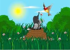 Mole. Loving mole presents bird rose flower on solar glade Stock Photos