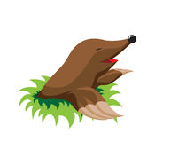 Mole Royalty Free Stock Images
