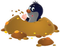 Mole. Isolated clip-art of a mole looking out of his burrow (2 versions of the illustration Stock Photos