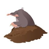 Mole Stock Images