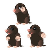 Mole animal character with different emotions Stock Photo