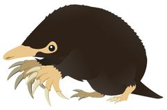 Mole Cartoon. Mole animal design element, color vector cartoon illustration horizontal Royalty Free Stock Photo