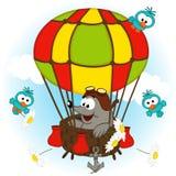 Mole in balloon Stock Photo
