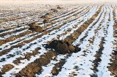 Mole cast. Mole's burrow in winter on field Stock Images