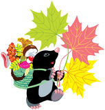 Mole collecting mushrooms. Cartoon mole collecting mushrooms in basket and holding autumnal leaves, isolated for little kids Stock Photo