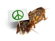 Mole cricket demonstrates for peaceful sollution to pest problem. European mole cricket - Gryllotalpa gryllotalpa - demonstrating against being killed as lawn Royalty Free Stock Images