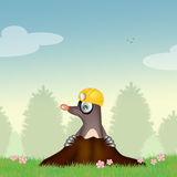 Mole in the den. Illustration of mole in the den Royalty Free Stock Photos
