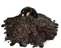Mole Royalty Free Stock Photography