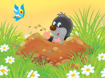 Mole. Funny little mole digging a burrow among grass on a glade Royalty Free Stock Photo