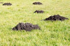 Mole-Hügel im Gartenrasen Lizenzfreie Stockfotos