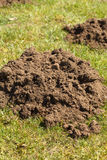 Mole Hill. Close up of a mole hill in a field of grass royalty free stock image