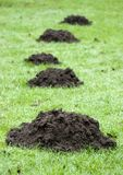 Mole hill. Five mole hills on the green grass Royalty Free Stock Photos