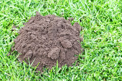 Mole Hill. Close up of one mole hill in the garden. Concept of have a problem stock images