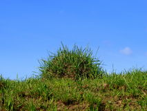 Mole-hill and grass Stock Image
