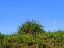 Mole-hill i trawa Obraz Stock