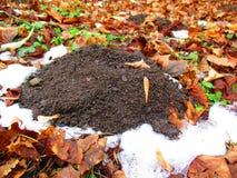 Mole hill Stock Photo