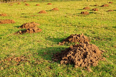 Mole hills Royalty Free Stock Photography