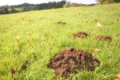 Mole hills. Line of mole hills in English parkland stock photography